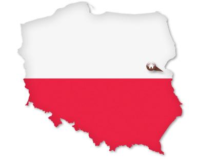 polskie grzyby